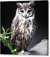 Striped Owl Canvas Print