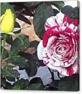 Striped Rose And Yellow Canvas Print