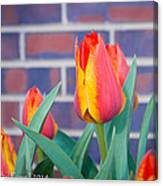 Striped Tulips Canvas Print
