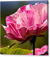 Stripes On  Roses Canvas Print