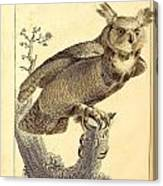 Strix Virginiana Owl Canvas Print