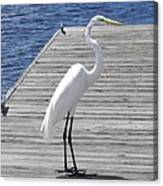 Strolling On The Dock Canvas Print