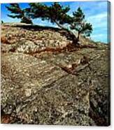 Strong Tree Canvas Print
