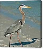 Strutting Heron Canvas Print