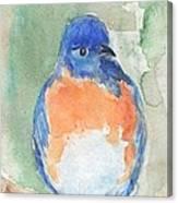 Study Of A Bluebird Canvas Print