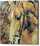 Study Of A Horse's Head Canvas Print