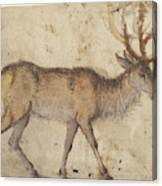 Study Of A Stag Recto,  Study Of Goats Verso Lucas Cranach Canvas Print