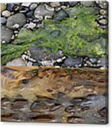 Stuff From The Sea Canvas Print