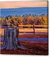 Stump Still Standing Canvas Print