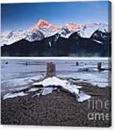 Stumps At Spray Lakes Canvas Print