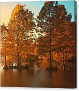 Stumpy Sunset Canvas Print