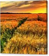Stunning Sunset Over Cereal Field Canvas Print