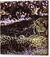 Styled Environment-the Modern Trendy Cheetah Canvas Print