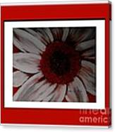 Stylized Daisy With Red Border Canvas Print