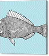 Stylized Fish. Sea Fish. Dorado. Black Canvas Print
