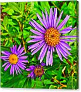 Subalpine Daisy By Vidae Falls In Crater Lake National Park-oregon  Canvas Print