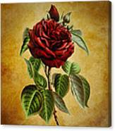 Subtle Elegance Canvas Print