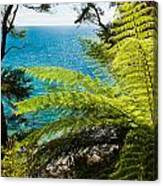 Subtropical Forest Of Abel Tasman Np In New Zealand Canvas Print