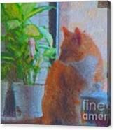 Suburban Jungle Cat Canvas Print