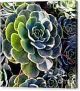 Succulent Canvas Print