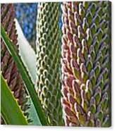 Succulents IIi Canvas Print