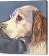 Such A Spaniel Canvas Print