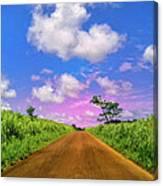 Sugar Cane Sunrise Canvas Print