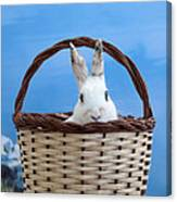 sugar the easter bunny 4 - A curious and cute white rabbit in a hand basket  Canvas Print