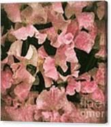 Sugared Sweetpeas Canvas Print