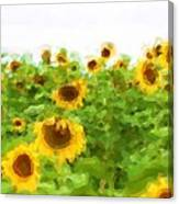 Sultry Sunflowers Canvas Print