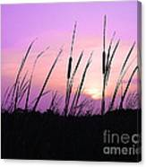 Sultry Sunset Canvas Print