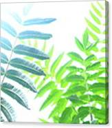 Sumac Canvas Print