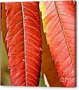 Sumac Leaves Canvas Print