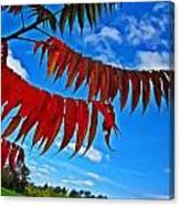 Sumac Red Canvas Print