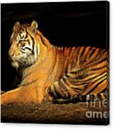 Sumatran Tiger 20150211brun Canvas Print