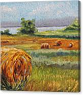 Summer Bales Canvas Print