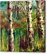 Summer Birch Canvas Print