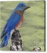 Summer Blue Bird Canvas Print