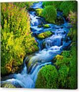 Summer Cascade Canvas Print