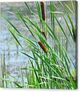 Summer Cattails In The Breeze Canvas Print