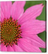 Summer Coneflower Canvas Print