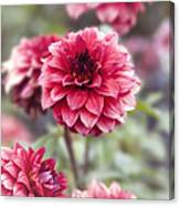 Summer Dahlia Canvas Print
