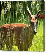 Summer Deer Canvas Print
