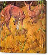 Summer Deer Canvas Print