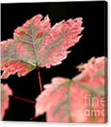 Summer Fall Canvas Print