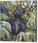 Summer Figs II Canvas Print