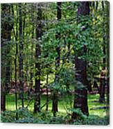 Summer Forest Canvas Print