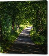 Summer Forest Road Canvas Print