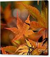 Summer Japanese Maple - 3 Canvas Print