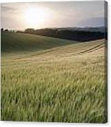 Summer Landscape Image Of Wheat Field At Sunset With Beautiful L Canvas Print
